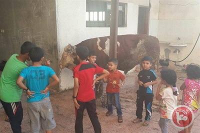 موظفو غزة.. قلة الرواتب منعت الأضاحي